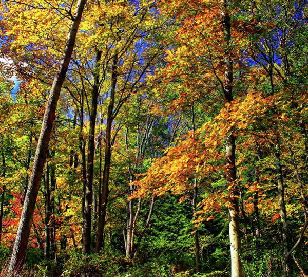 Photograph - Autumn Forest by Anthony Dezenzio