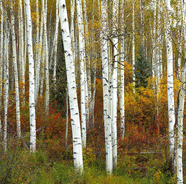 Wall Art - Photograph - Autumn Forest Beauty by Tim Reaves