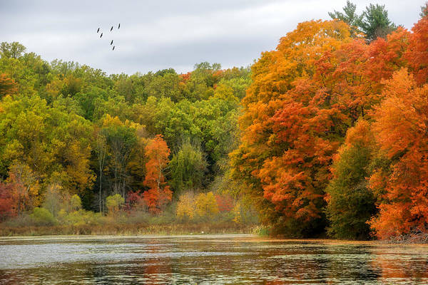 Wall Art - Photograph - Autumn Forest by June Marie Sobrito
