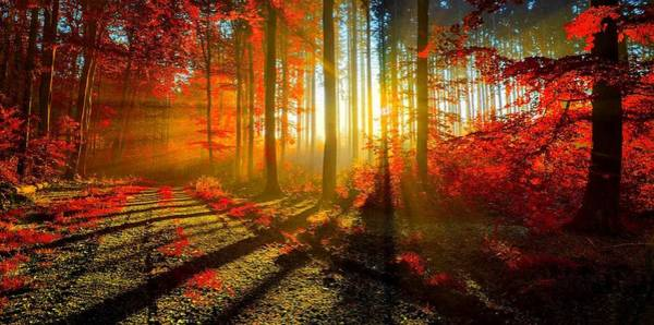 Wall Art - Photograph - Autumn Forest Light by Movie Poster Prints