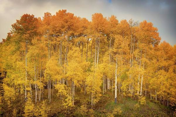 Photograph - Autumn Forest by OLena Art Brand