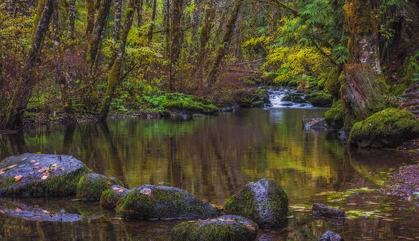 Photograph - Autumn Forest Reflections by Loree Johnson