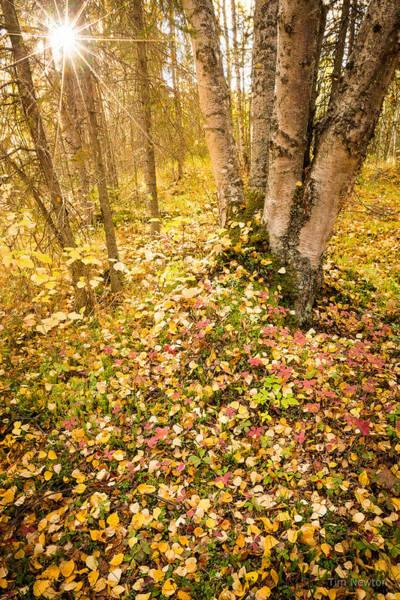 Photograph - Autumn Forest Scene by Tim Newton