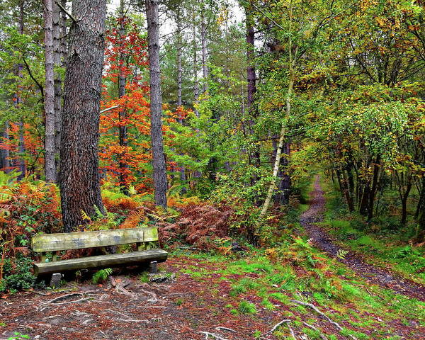 Photograph - Autumn Forest Scenery by Anthony Dezenzio