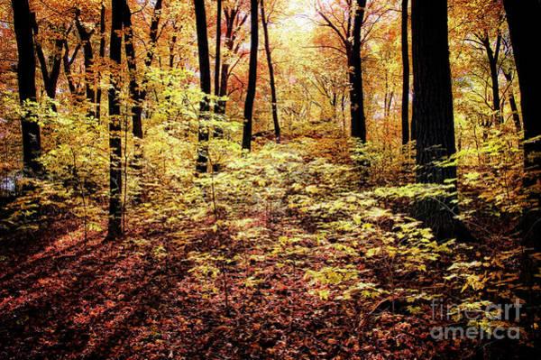 Photograph - Autumn Forest by Scott Kemper