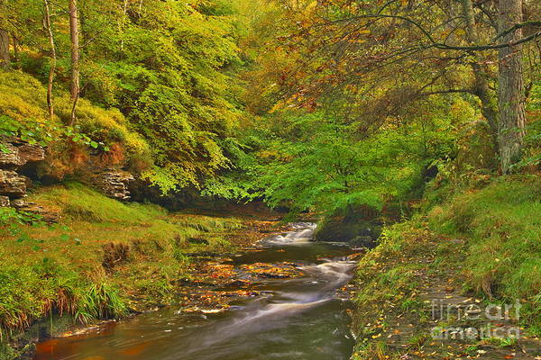 Photograph - Autumn Forest Stream by Martyn Arnold
