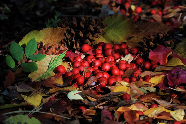 Wall Art - Photograph - Autumn Gatherings by Donna Kennedy