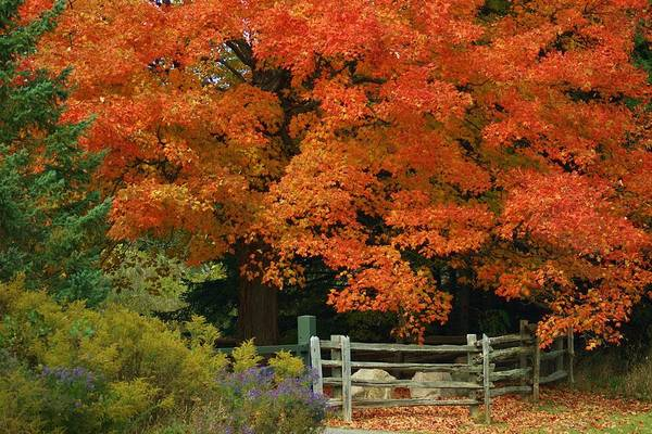 Hockley Valley Photograph - Autumn Glory by Maria Keady