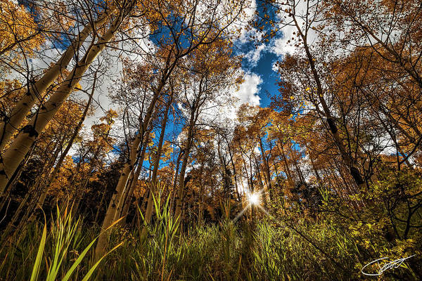 Photograph - Autumn Glow by Jeff Niederstadt