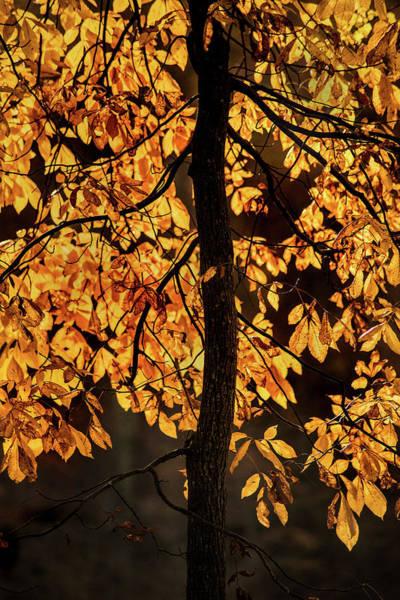 Photograph - Autumn Gold by Don Johnson