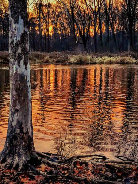 Photograph - Autumn Gold by Jill Love