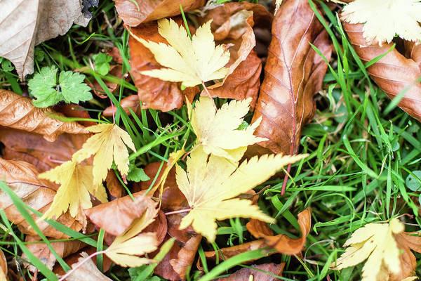 Photograph - Autumn Gold Leaves On The Ground by Jacek Wojnarowski