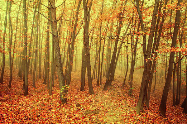 Photograph -  Autumn Golden Forest In Fog 1 by Jenny Rainbow