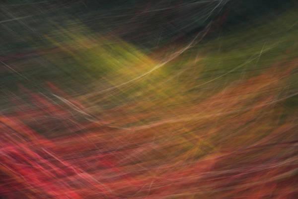 Photograph - Autumn Graphics by Yulia Kazansky