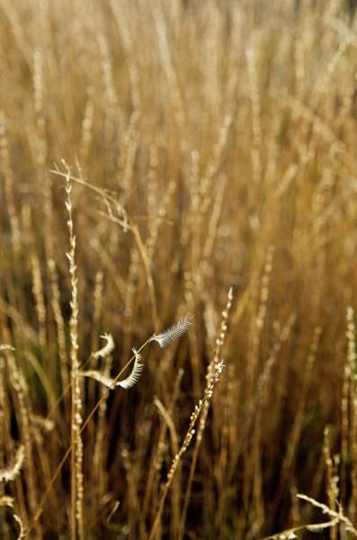 Photograph - Autumn Grass by Adam Reinhart