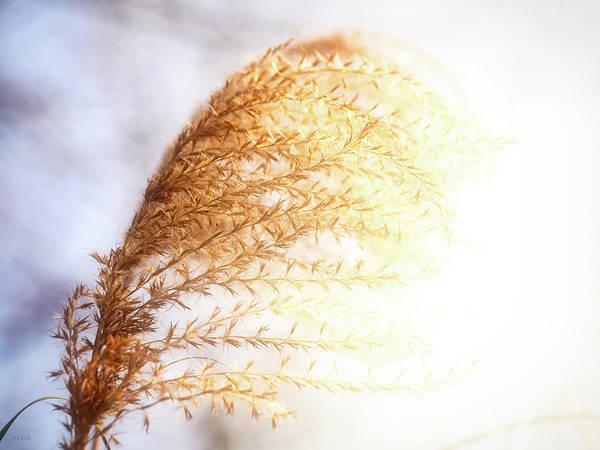 Photograph - Autumn Grass by Bob Orsillo