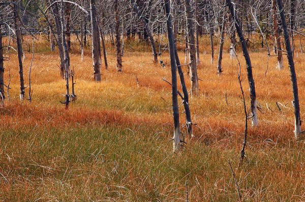 Autumn Grasses In Yellowstone Art Print