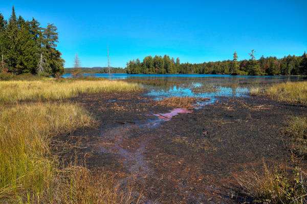 Photograph - Autumn Grasses On Raquette Lake by David Patterson