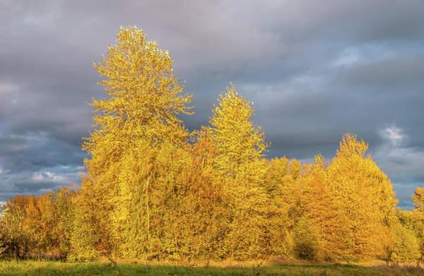 University Of Washington Wall Art - Photograph - Autumn Grove by Marv Vandehey