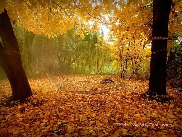 Photograph - Autumn Hammock  by Guy Hoffman