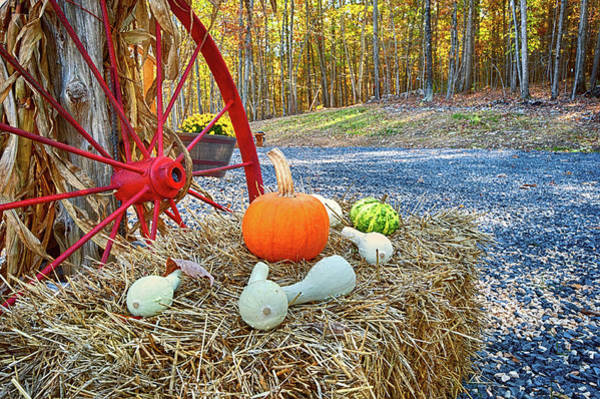 Photograph - Autumn Harvest by Lara Ellis