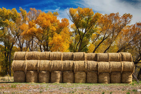 Photograph - Autumn Hay Bales by James BO Insogna