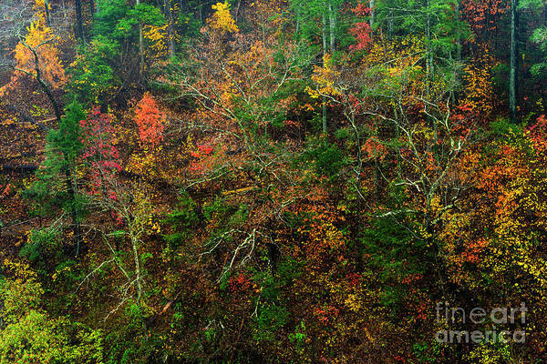 Photograph - Autumn Hillside Blue Ridge Parkway by Thomas R Fletcher