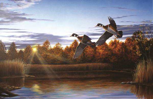 Autumn Home - Wood Ducks Art Print