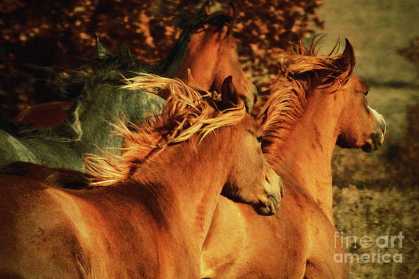 Photograph - Autumn Horses by Dimitar Hristov