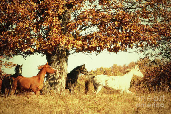 Photograph - Autumn Horses II by Dimitar Hristov