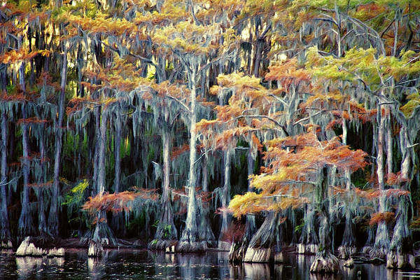 Wall Art - Photograph - Autumn In A Cypress Forest by Lana Trussell