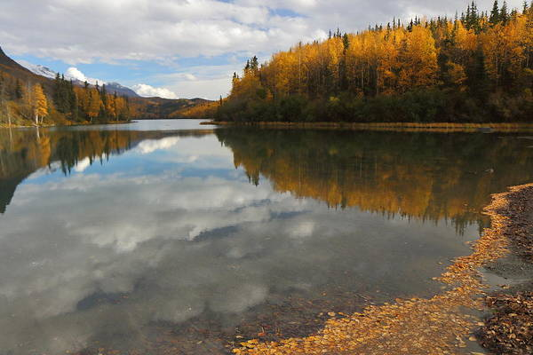 Photograph - Autumn In Alaska by Steve Wolfe