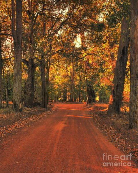 Photograph - Autumn In Bridgetown, Western Australia by Elaine Teague