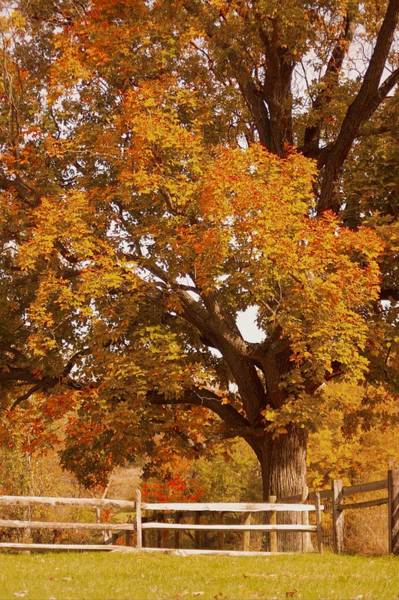 Photograph - Autumn In Chester County by Susan Maxwell Schmidt