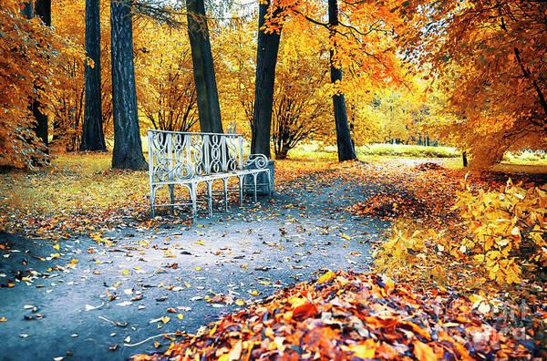 Photograph - Autumn In City Park by Ariadna De Raadt