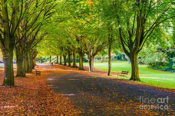 Photograph - Autumn In Clifton by Colin Rayner