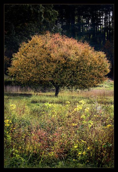 Wall Art - Photograph - Autumn In Dc  by Robert Fawcett