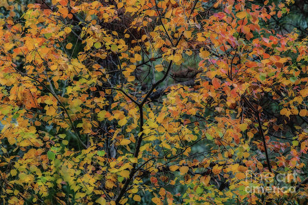 Photograph - Autumn In December by Dale Powell