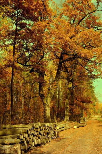 Gorecki Photograph -  Autumn In Forest by Henryk Gorecki