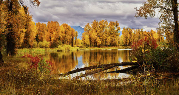 Photograph - Autumn In Jackson Wyoming by TL Mair
