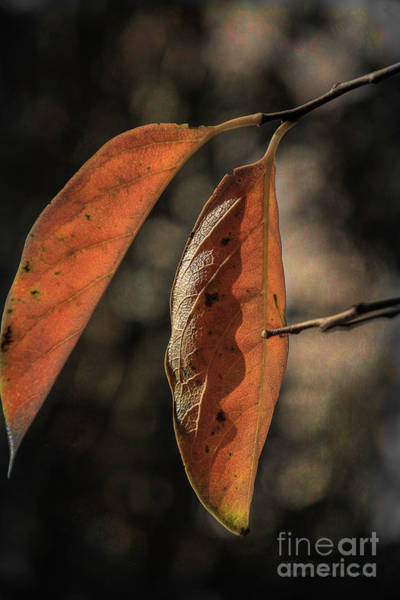 Photograph - Autumn In May by Elaine Teague