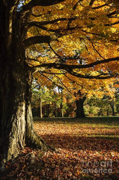 Photograph - Autumn In Mercer County by Debra Fedchin