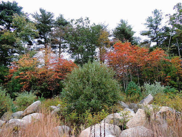 Photograph - Autumn In Rhode Island by Andrew Chambers