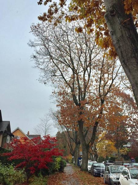 Photograph - Autumn In The City 10 by Victor K