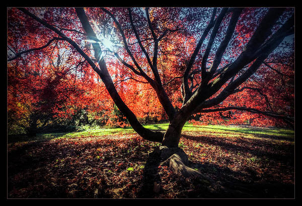 Wall Art - Photograph - Autumn In The Nations Capital by Robert Fawcett