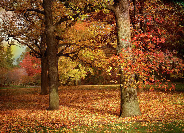 Fallen Tree Photograph - Autumn In The Orchard by Jessica Jenney