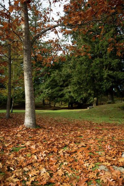 Photograph - Autumn In The Park by Edgar Laureano