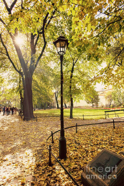 Photograph - Autumn In The Park by Juli Scalzi