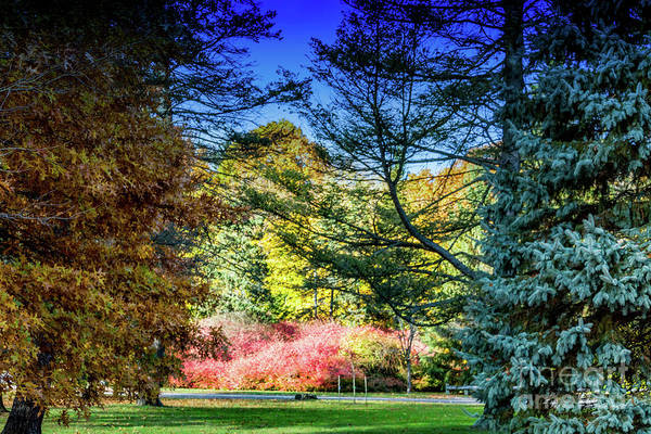 Photograph - Autumn In The Park by William Norton