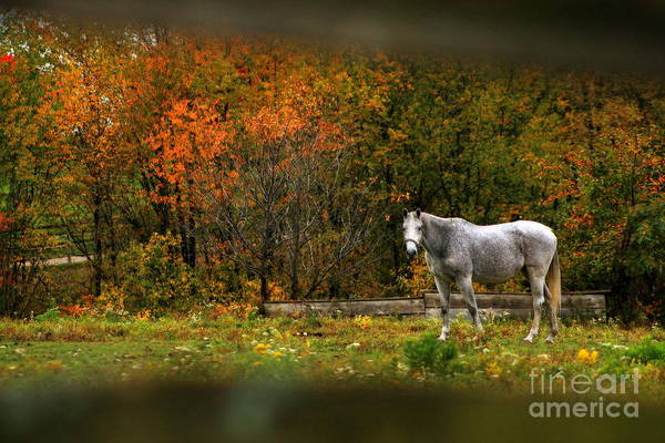 Photograph - Autumn In The Pasture by Angela Rath